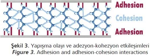 adezyon ve kohezyon terimleri