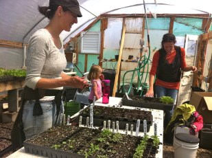 Crystal and Lara have been busy in the greenhouse! This time they brought along their little helpers. Click to enlarge.