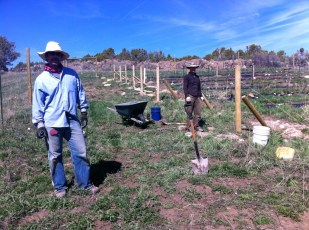 Gary and Kiki working in the berries & orchard.