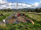 planting the hoophouse