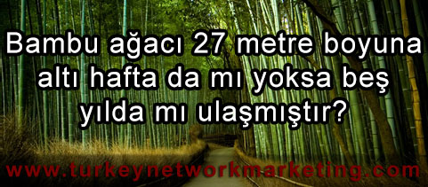 Network Marketing ve Bambu Ağacı