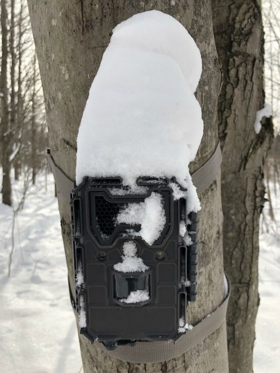 Without -TRAIL CAM WOOD HOOD