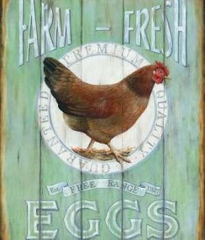 Field Trip- Farm Fresh Eggs