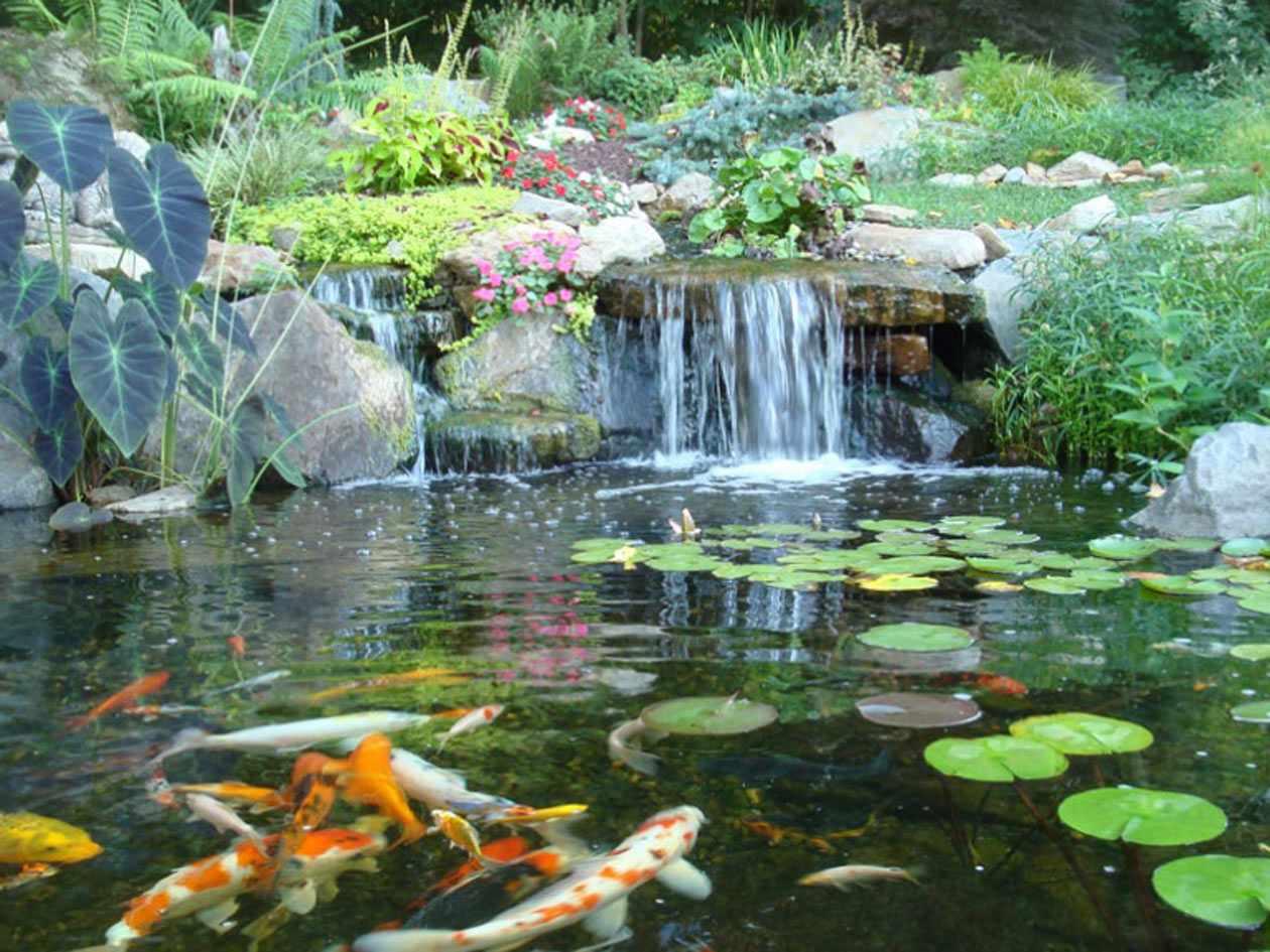 Water Garden Landscaping