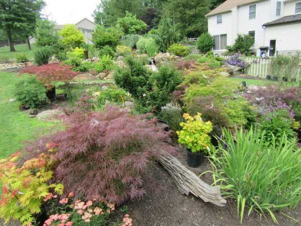 ornamental trees japanese gardens 10 Best Ornamental Trees for Southeastern PA Gardens