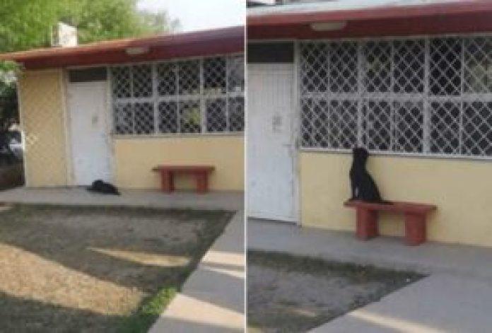 Perro esperando a su amo afuera del salón de clases