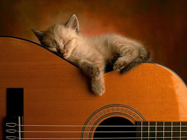 Kediler Neden Çok Uyur konusunda uyuyan sevimli bir kedi