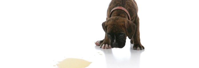 Yavru ve Yetişkin Köpeklerde Hem İç Mekanda Hem Dış Mekanda Tuvalet Eğitimi Nasıl Verilir