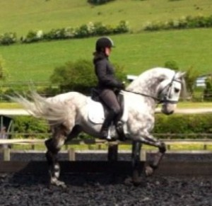 Lauren on Alia, the most stunning Andalusian Stallion . Came to us for training, the most intelligent and gifted of horses!