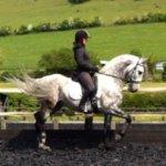 Lauren working Alia, Andalusian Stallion