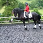"""Euwe - Friesian. """"The training at Turville has been incredible. Euwe has learnt all the lateral work and is now moving on to more advanced work such as piaffe. This is something I would never have achieved without the superb training we have received during our regular stays. We really cannot thank Diane and team enough."""" Clare Axon-Saunders"""