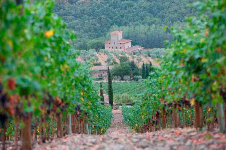 Castello d'Albola,importante azienda vitivinicola toscana del Chianti