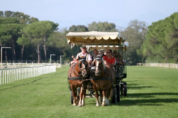 E' possibile visitare la Tenuta di San Rossore a cavallo, in carrozza, a piedi o con un trenino