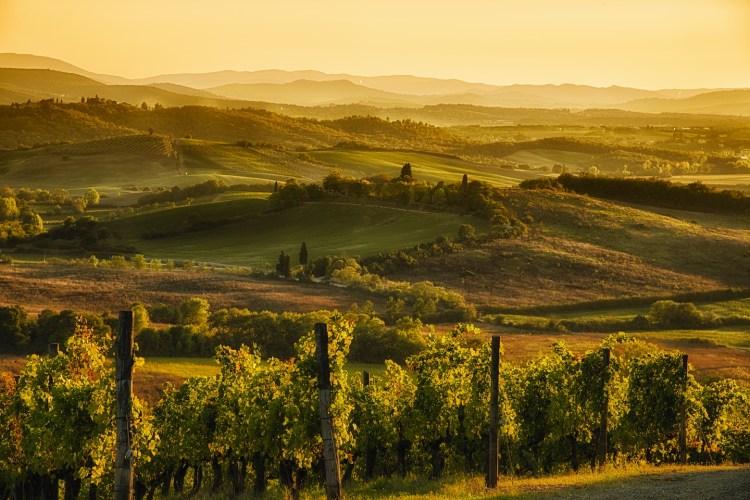 Agriturismi nel Chianti Classico, immersi tra i vigneti e gli ulivi secolari delle colline toscane, per un weekend all'insegna di una real tuscan experience.