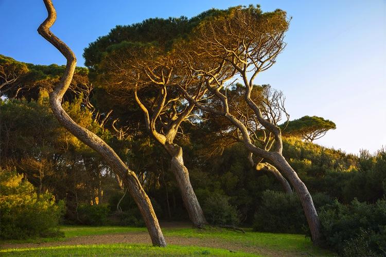 I Parchi della Val di Cornia sono un insieme di aree naturali protette che comprendono tratti di Costa degli Etruschi e delle montagne della Maremma