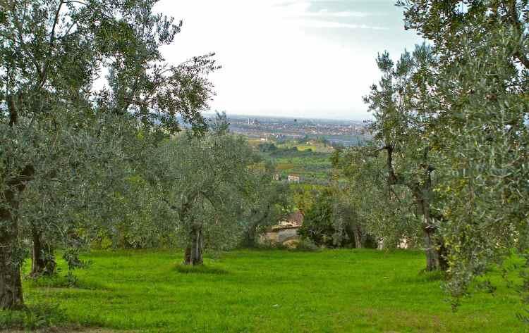 La Fattoria Ramerino, agricoltura biologica certificata, rappresenta una delle eccellenze italiane nel campo dell'olio extravergine di oliva biologico
