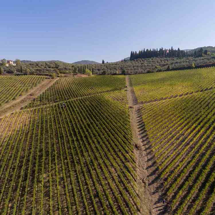 Tour di Cantine Aperte 2017 con le aziende vitivinicole toscane selezionate da TuscanyPeople, dal Chianti a Lucca, dalla Maremma a Montalcino
