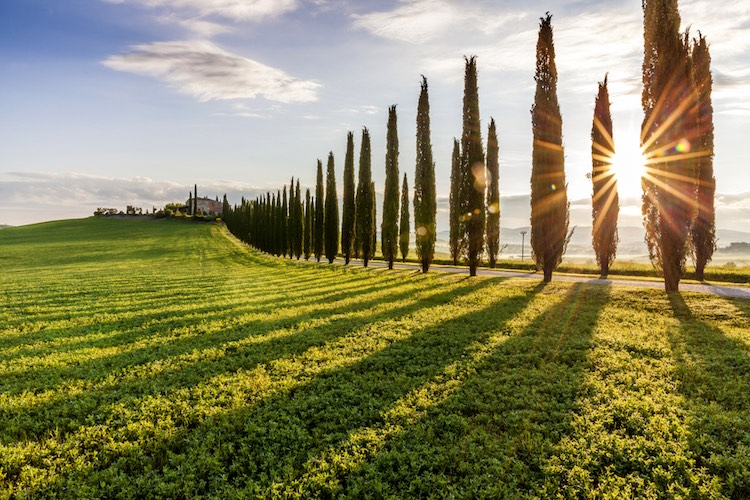 Le Crete Senesi sono una regione geografica della Toscana che si trova a sud-est di Siena, confinanti con il Chianti Classico, la Val di Chiana e la Val d'Orcia.