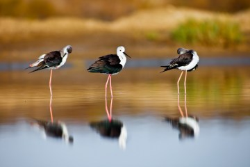 La Laguna di Orbetello alle pendici del Monte Argentario nela Bassa Maremma toscana è un patrimonio di biodiversità da preservare con cura