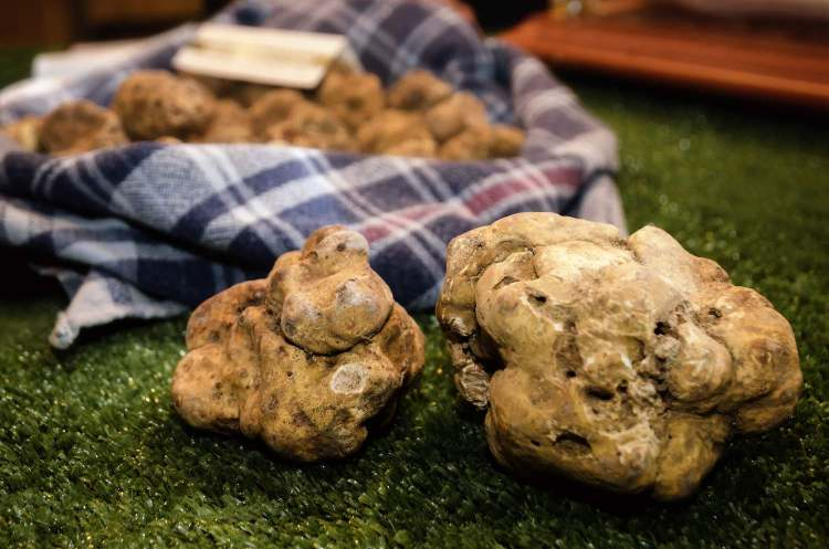 Il tartufo in Toscana è un prodotto molto pregiato che cresce spontaneo in 6 zone tra le provincie di Pisa, Siena, Arezzo e Grosseto