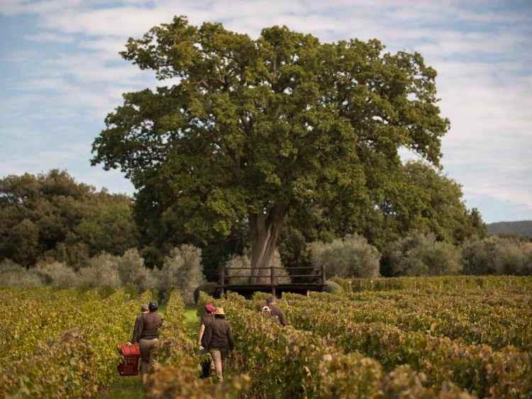 Intervista a Olga Fusari, l'enologa di Ornellaia, azienda vitivinicola famosa nel mondo, grazie ai suoi vini toscani maturati tra le vigne di Bolgheri