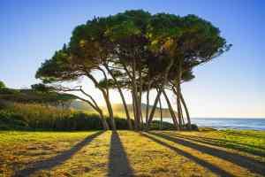 Il Golfo di Baratti è una delle spiagge più belle della dell'Alta Maremma: una fresca pineta, acque limpide e i resti etruschi di Populonia