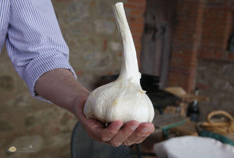 L'Aglione toscano è un presidio Slow Food con cui si prepara uno dei piatti tipici toscani della Val di Chiana: i Pici all'Aglione