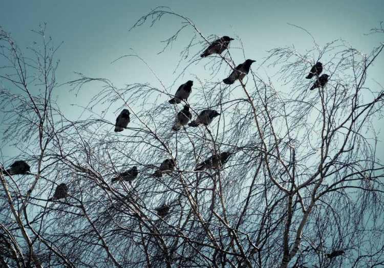 Raccolta di detti toscani: i corvi non si cavano gli occhi fra di sè