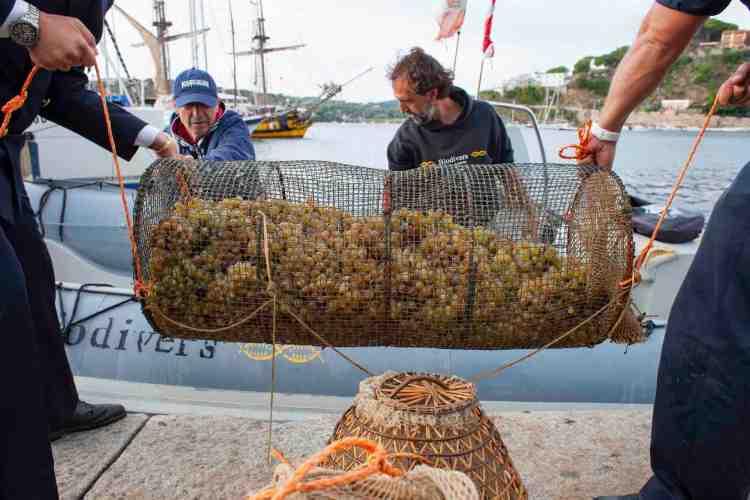 Immersione uve in mare per la produzione del vino Nesos