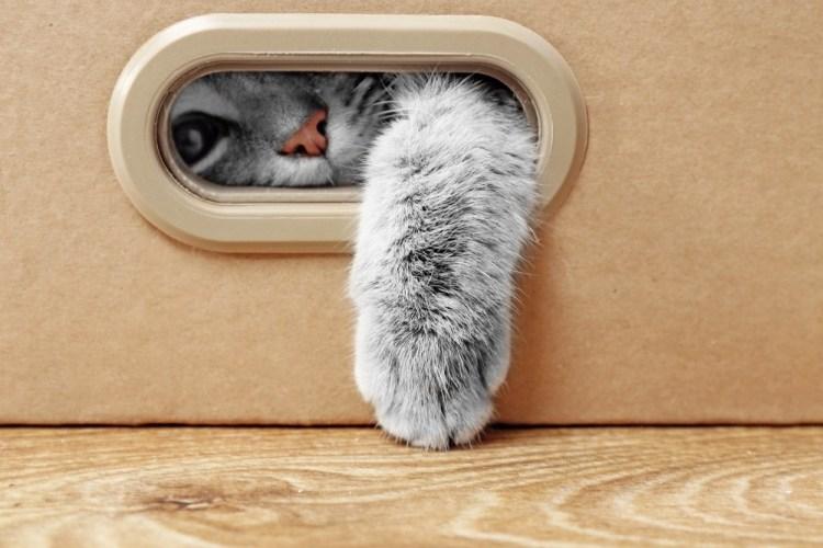 Zampetta di gatto esce da una scatola