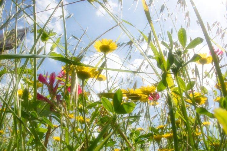 La Toscana è una delle regioni d'Italia più ricche in biodiversità