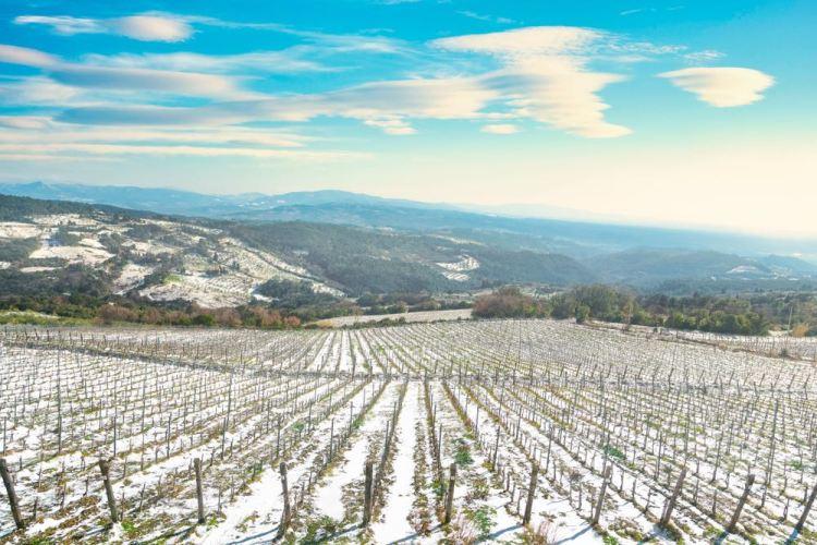 Vigne innevate a Riparbella, borgo toscano vicino in Alta Maremma
