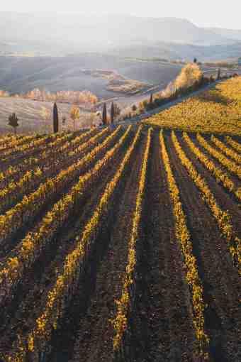 Toscana in verticale - Vigneto