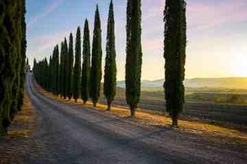 Bellissima strada in Toscana tra i cipressi in Alta Maremma