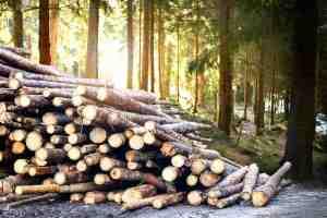 Legna tagliata in un bosco