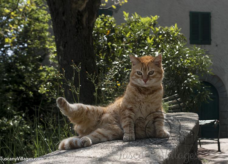 cat and castelvecchio 2