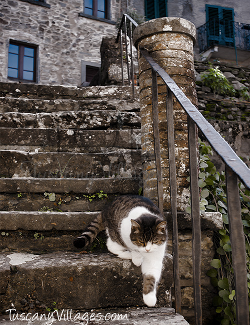 cat coming down steps