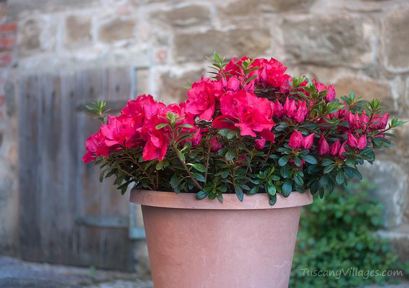 Aramo-flowers