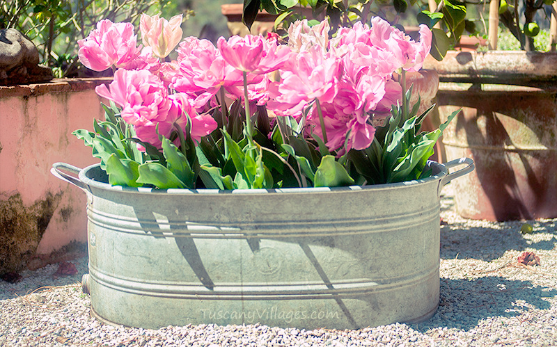 Pink flowers in an old tin bath