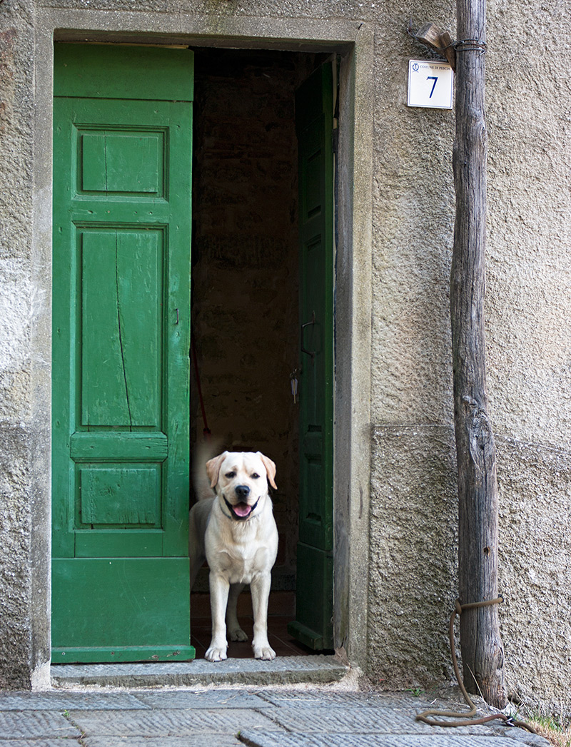 Doggie outside old doorway