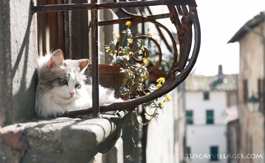 cat in a window, Buggianno, Tuscany