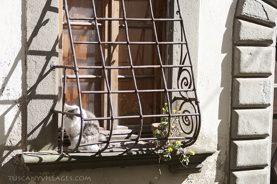 cat in a tuscan window