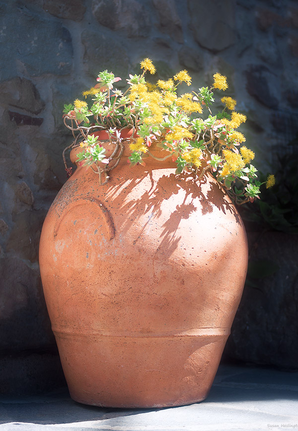 terracotta vase yellow flowers