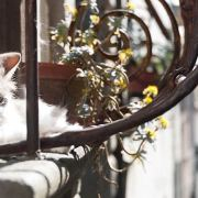 Cat on a hot window ledge image wrap
