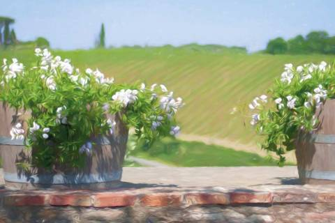 pots and flowers, siena countryside, Tuscany