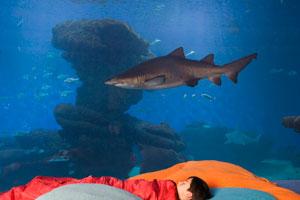 Halloween entre tiburones en Palma Aquarium