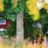 árboles seguro de hogar