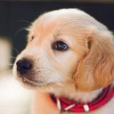 Alimentos prohibidos en mascotas