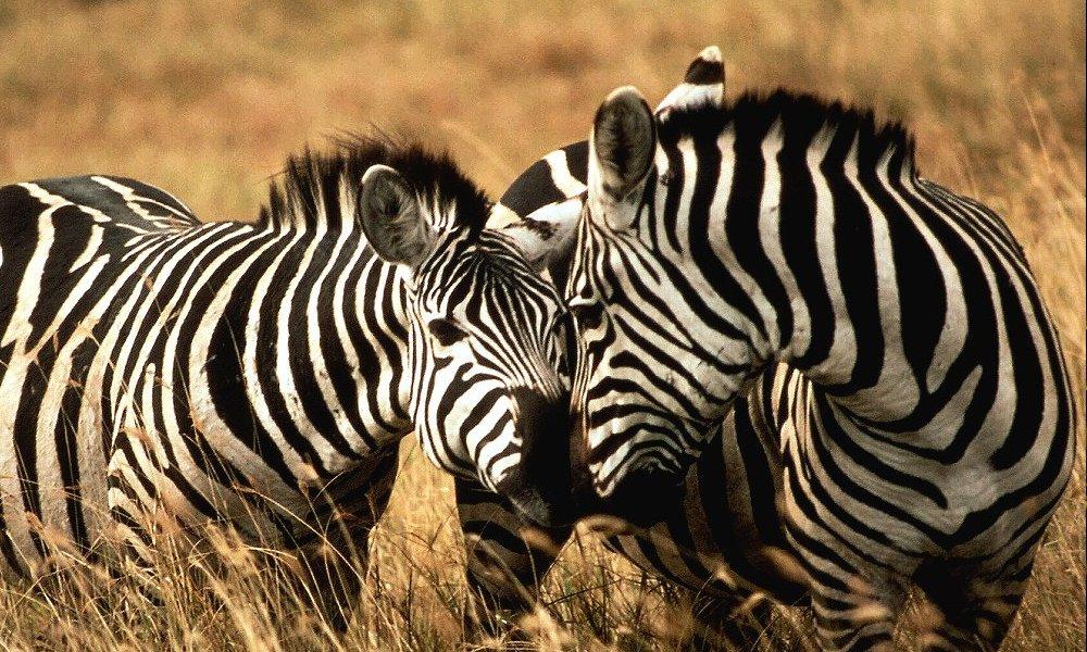 Kilimanjaro Safari Serengeti