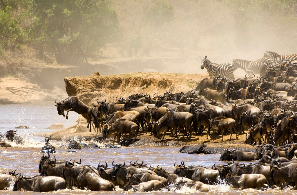 Kilimanjaro Safari Wildebeest Migration